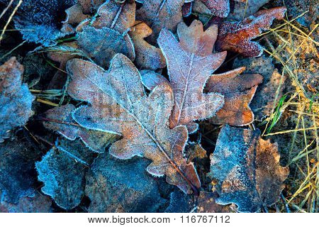 nice autumn frosted leafs  - abstract natural background