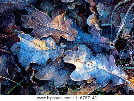 autumn frozen leafs