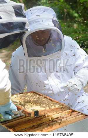 Two men working on bee hive