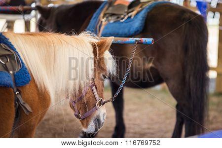 pony rides at a fair