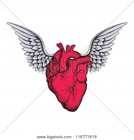 Hand drawn elegant red heart with wings, sketch for tattoos desi