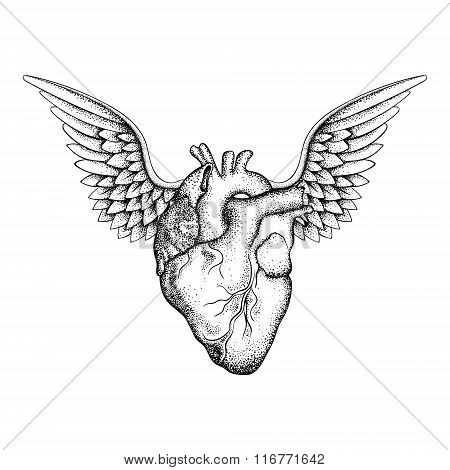 Hand drawn elegant heart with wings, black sketch for t-shirt pr
