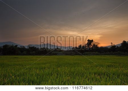 Sunset rice field in Chianh Mai thailand
