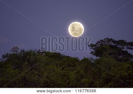 Full moon in the jungle