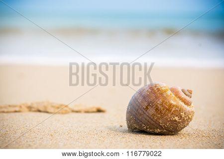 hermit crab on beach.