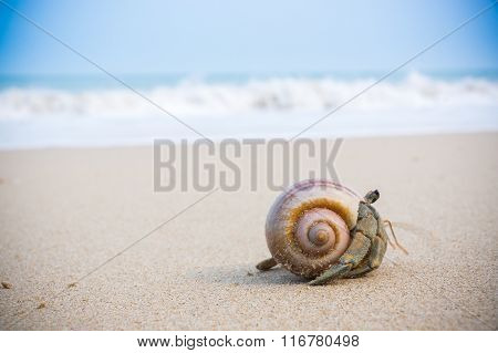 Hermit Crab On Beach.