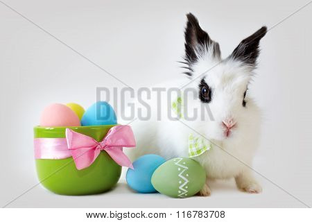 Fluffy White Rabbit With Easter Eggs Isolated On Grey Background.