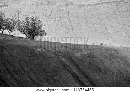 Czech Moravia Hills. Agriculture . Arable Lands In Spring