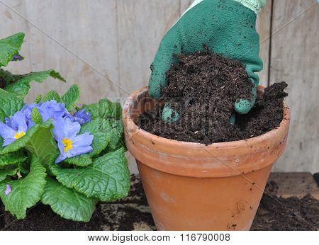 Fill A Ground Flower Pot