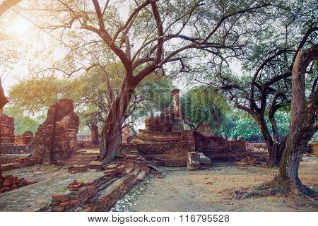 ruins of the old capital of Siam - Ayutthaya, Thailand