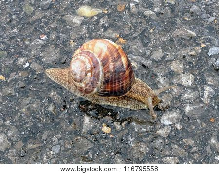 Close-up of single snail