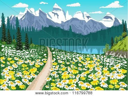 dirt road in the middle of the chamomile field leading to a mountain lake
