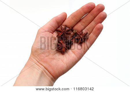 Spices: star anise, black pepper, cloves on a palm on a white background