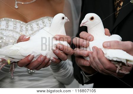 Two White Dove In The Hands Of The Bride And Groom Close Up