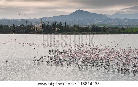 Flamingo Birds At Larnaca Salt Lake