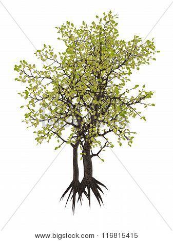 Egyptian carissa tree, c. edulis - 3D render
