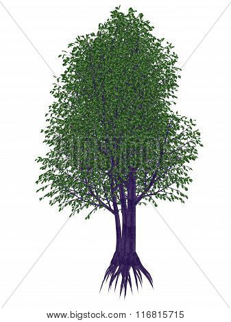 Wild peach or umKokoko tree, kiggelaria africana - 3D render
