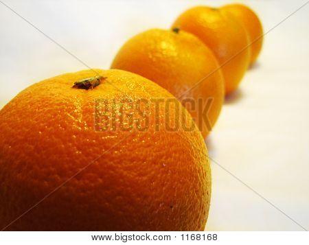 Row Of Oranges