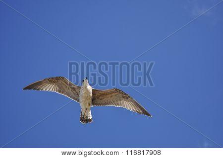 Sea Bird In The Sky