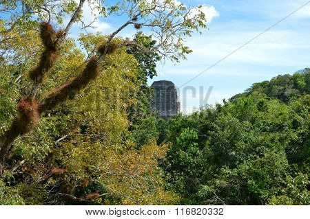 Rich Vegetation And The Top Of The Ancient Maya Temple In Tikal National Park, Guatemala
