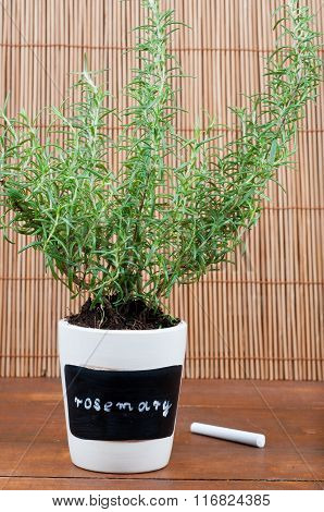 Potted Rosemary Herb With Label