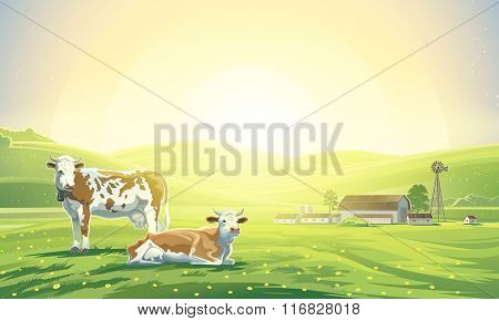 Two cows in a landscape and a farm. Sunrise morning.