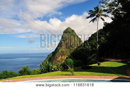 Palm Tree And Piton