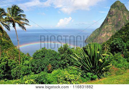 Rainbow Under Trees