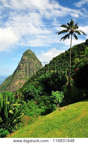 Palm Tree Stands Parallel To Piton Petite