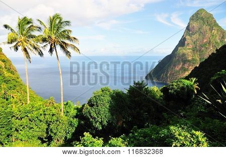 Lush Forest In The Hills Overlooking Piton Bay