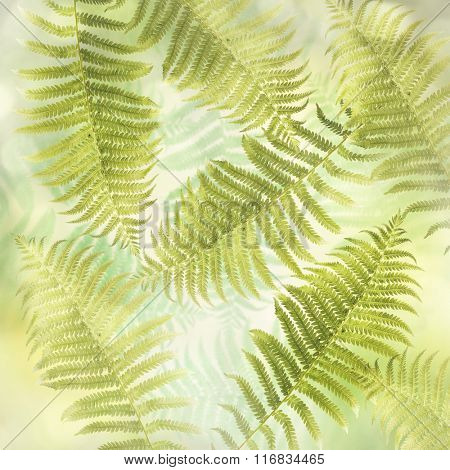 Green Fern Leaves for  Background