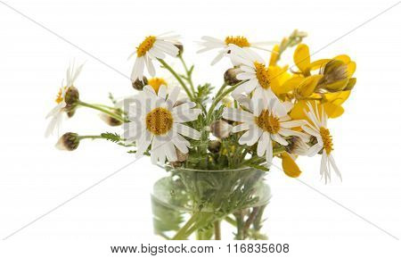 Small Bunch Of Canarian Marguerite Daisy