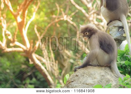 Cute Monkey Lives In A Natural Forest Of Thailand. Selective Focus. Vintage Tone