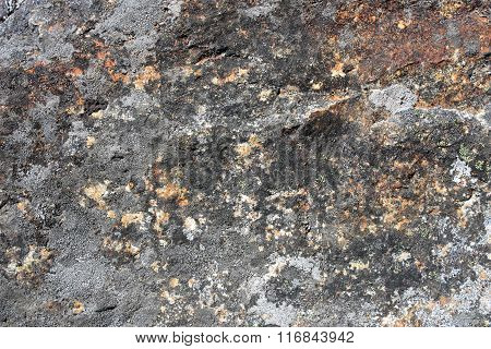 Rock Surface Covered By Lichens.