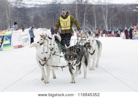 Kamchatka Dog Sled Race Beringia. Russia, Far East, Kamchatsky Krai