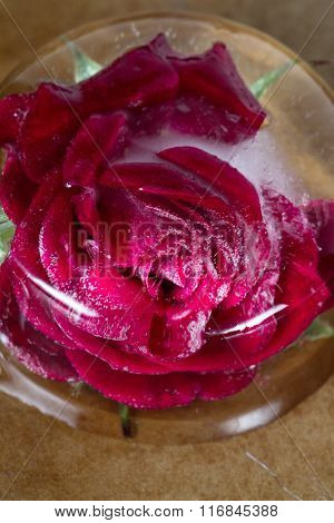 Small Red Rose Frozen In A Block Of Ice