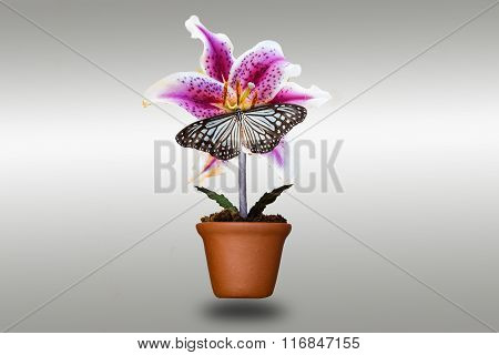 Lily Flower And Butterfly In Clay Pots