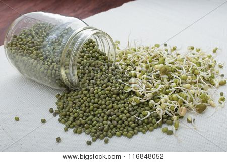 Spilled Jar Of Mung Beans And Sprouts