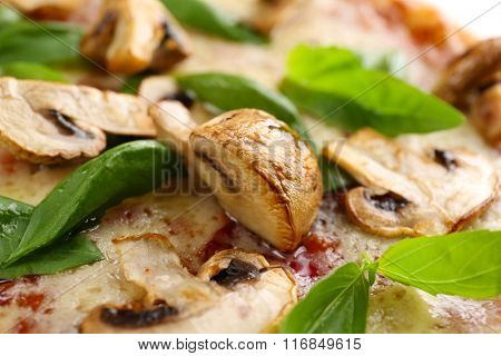 Delicious tasty pizza with basil and champignon, closeup