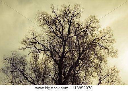 Silhouette Of Bare Tree - Yellow Tone