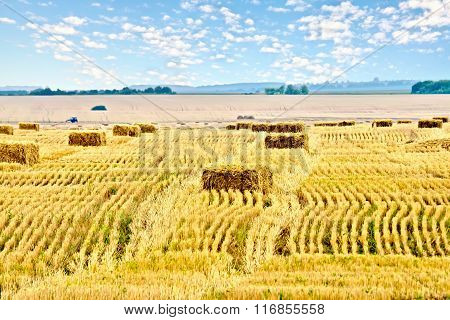 Bales of straw rectangular and sky