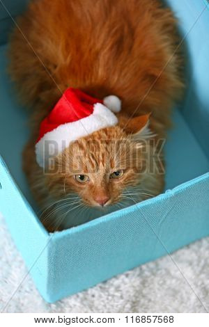 Fluffy red cat with Santa hat sitting in a box