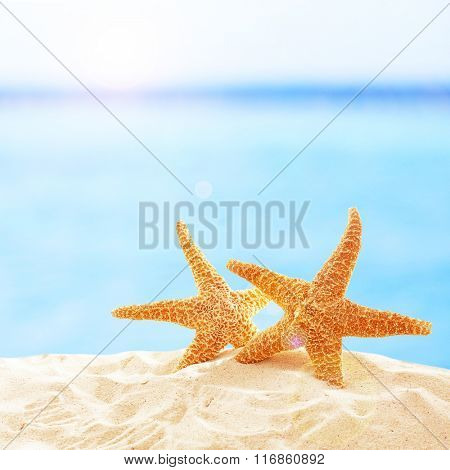 Starfishes on sandy beach