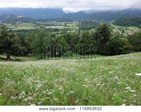 Meadow with grass and flowers in the mountains