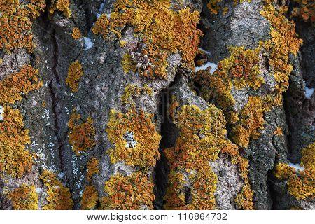 Moss On Tree Bark