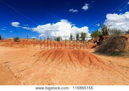 big cactuses in red desert, tatacoa desert, columbia, latin america, clouds and sand