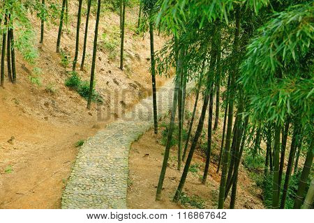 Stone Pathway through Bamboo Forest