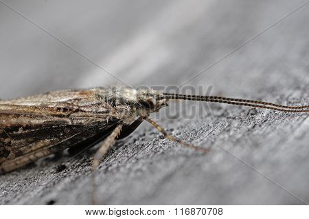 tired moth
