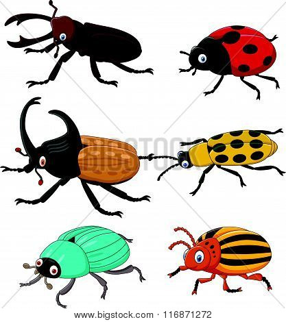 Cartoon funny beetle collection