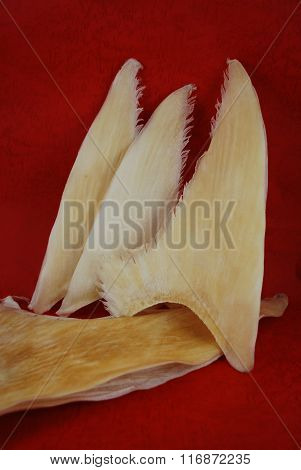Dried Shark Fins In The Traditional Chinese Shop